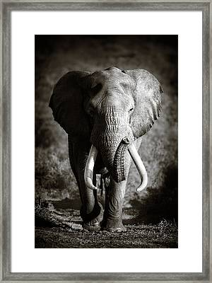 Elephant Bull Framed Print by Johan Swanepoel