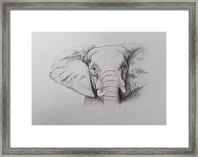 Elephant Framed Print by Ele Grafton