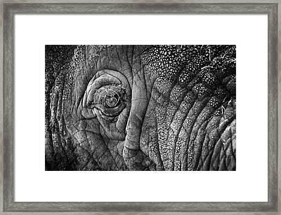 Elephant Eye Framed Print by Sebastian Musial