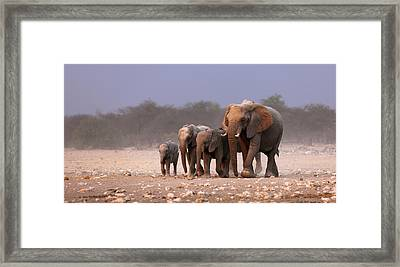 Elephant Herd Framed Print by Johan Swanepoel
