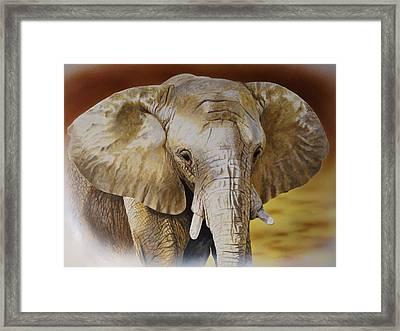 Elephant Framed Print by Julian Wheat