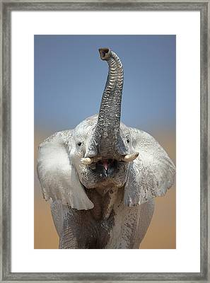 Elephant Portrait Framed Print by Johan Swanepoel