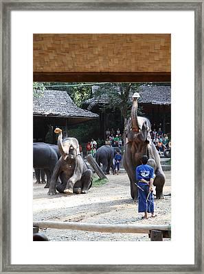 Elephant Show - Maesa Elephant Camp - Chiang Mai Thailand - 011321 Framed Print by DC Photographer