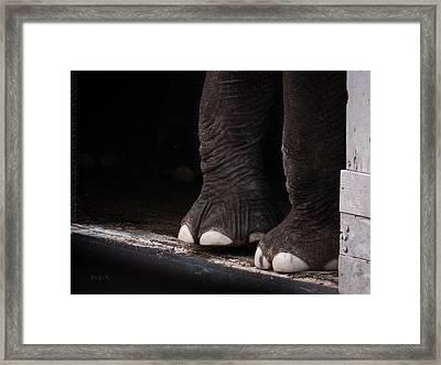 Elephant Toes Framed Print by Bob Orsillo