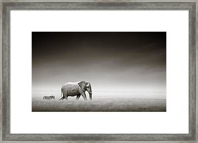 Elephant With Zebra Framed Print by Johan Swanepoel
