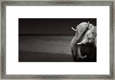 Elephants Interacting Framed Print by Johan Swanepoel