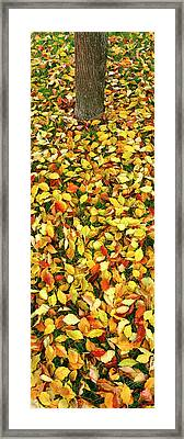 Elevated View Of Fallen Leaves, Pacific Framed Print by Panoramic Images