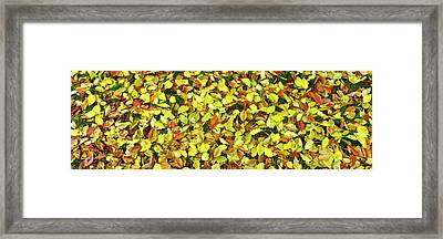 Elevated View Of Fallen Leaves, San Framed Print by Panoramic Images