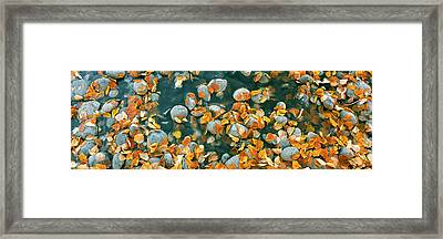 Elevated View Of Leaves In A Creek Framed Print by Panoramic Images