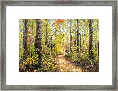 Elfin Forest Framed Print by Debra and Dave Vanderlaan