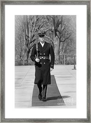 Elite Guard Framed Print by Inge Johnsson