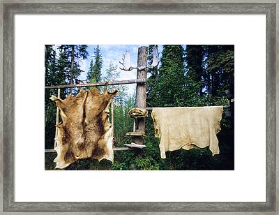 Elk And Moose Hides Stretched And Hang Framed Print by Angel Wynn