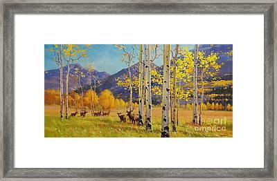 Elk Herd In Aspen Grove Framed Print by Gary Kim