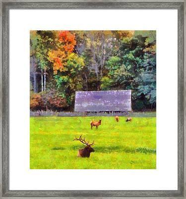 Elk In Cataloochee Valley Framed Print by Dan Sproul
