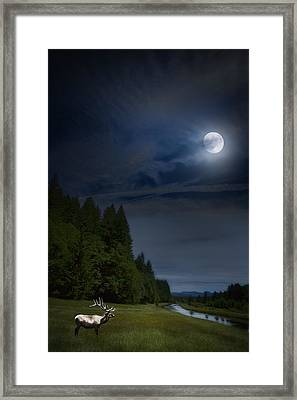Elk Under A Full Moon Framed Print by Belinda Greb