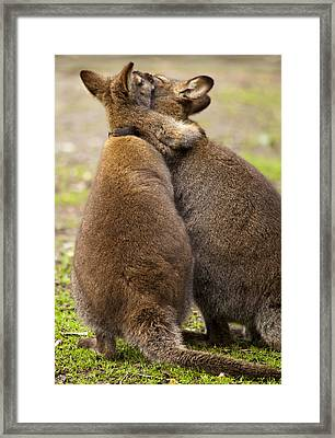 Embrace Framed Print by Mike  Dawson