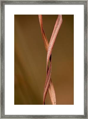 Embrace Framed Print by Shane Holsclaw