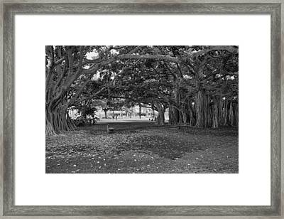 Embraced By Trees Framed Print by Douglas Barnard