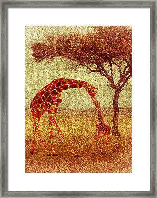 Emma's Giraffe Framed Print by Jack Zulli