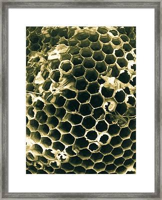 Empty Nest Framed Print by Robert J Andler