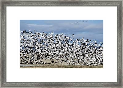 En Masse Framed Print by Loree Johnson