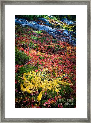 Enchanted Colors Framed Print by Inge Johnsson