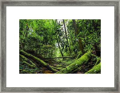 Enchanted Forest Framed Print by Debra and Dave Vanderlaan