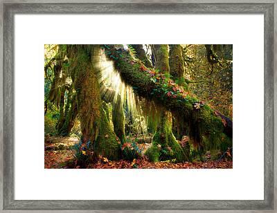 Enchanted Forest Framed Print by Inge Johnsson