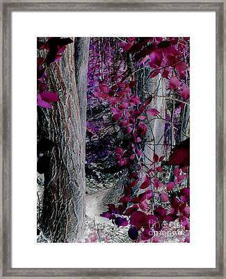 Enchanted Forest Framed Print by Martin Howard
