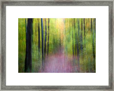 Enchanted Forest Framed Print by Rob Huntley