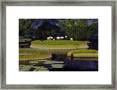 Enchanted Water Garden Framed Print by Byron Varvarigos