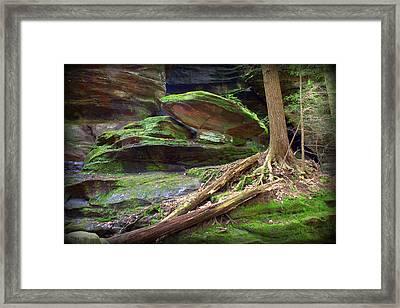 Enchanting Framed Print by J Allen