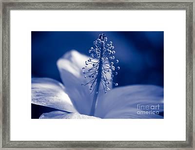 Enchanting Moments - Pua Aloalo - Koki'o Ke'oke'o - Hibiscus Arnottianus - Hawaiian White Hibiscus  Framed Print by Sharon Mau