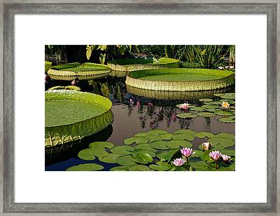 Enchanting Water Garden Framed Print by Byron Varvarigos