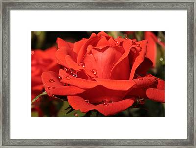 Enchantment Framed Print by Connie Handscomb