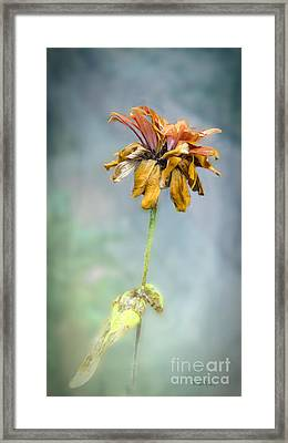 End Of Life Framed Print by Betty LaRue