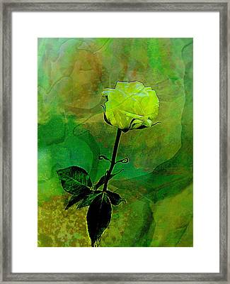 Enduring Yellow Rose Framed Print by Shirley Sirois