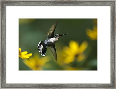 Energy In Motion Framed Print by Christina Rollo