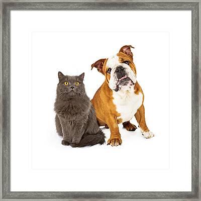 English Bulldog And Gray Cat Framed Print by Susan Schmitz