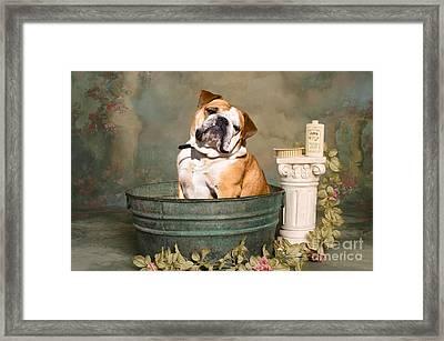 English Bulldog Portrait Framed Print by James BO  Insogna