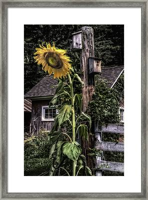 Sunflower Country Framed Print by Thomas Schoeller