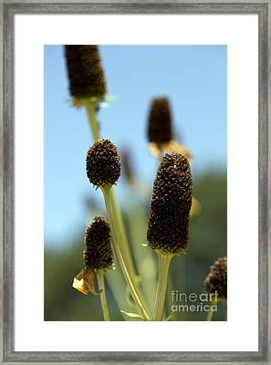 Enjoy Your Own Beauty Framed Print by Amanda Barcon