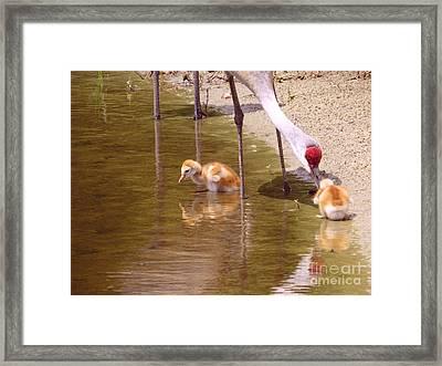 Enjoying At The Lake Framed Print by Zina Stromberg