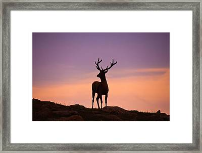 Enjoying The View Framed Print by Darren  White