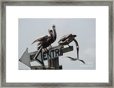 Entr Framed Print by GD Rankin