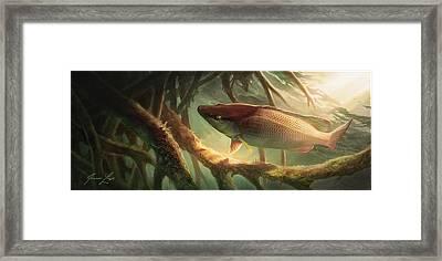 Entre Mangles Framed Print by Javier Lazo