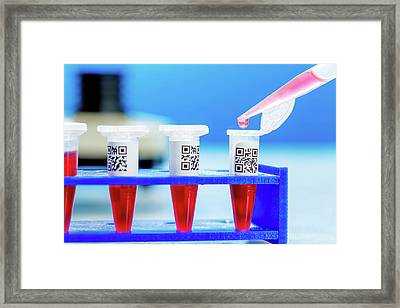 Eppendorf Tubes With Qr Codes Framed Print by Wladimir Bulgar