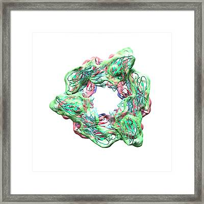 Epstein Barr Virus Proteins Framed Print by Animate4.com/science Photo Libary