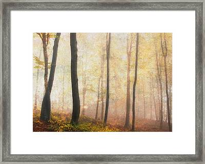 Equilibrium Of The Forest In The Mist Framed Print by Georgiana Romanovna