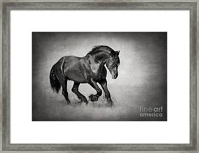 Equine In Motion Framed Print by Kathy Weigand